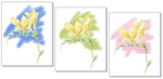 06-08-12 Freesia-test.jpg